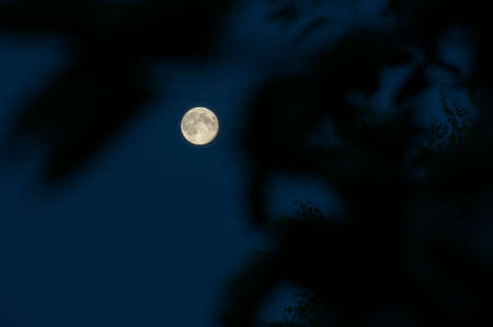Moon view through branches at dark night with clear sky