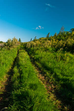 Rural grass way tracks at day time with clear sky photo