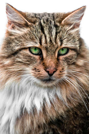 Looking cat with large and green eyes portrait front view