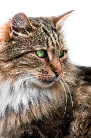 imperious: Looking cat with large and green eyes portrait side view Stock Photo