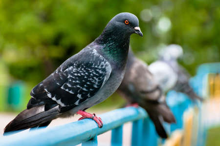 Pigeon sitting on support in park with blurry background