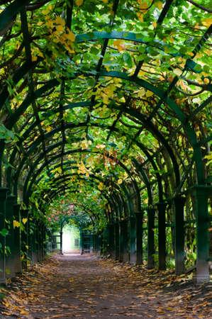 하루 시간 자연 터널의 끝에서 빛
