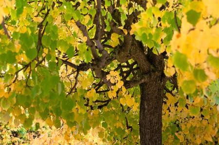 Tree coma with green and yellow leaves at day time