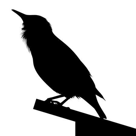 starling: Detailed silhouette of common starling or Sturnus vulgaris sitting on roof of its home. Illustration