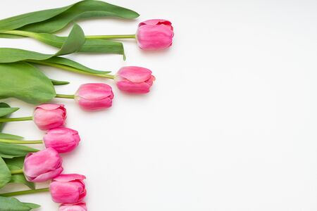 pink tulips on white background mock up