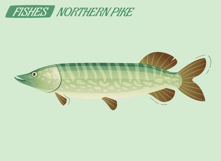 Pêcher le caractère du grand brochet. Illustration vectorielle de dessin animé. Concept de pêche ou de nourriture