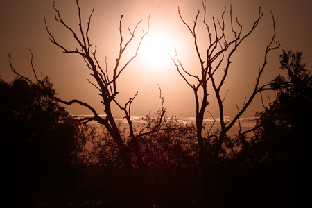 forlorn: Shadows of branches under the hot sun of the field. Stock Photo