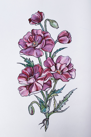 Sketch of beautiful flowers on white background.