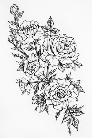 Black and white sketch of the three big beautiful roses Standard-Bild