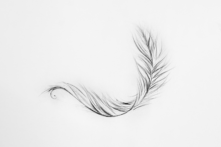 fuzz: Sketch of a light feather white background.