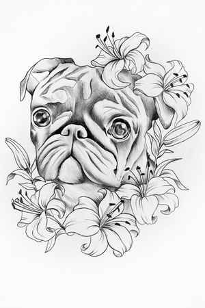 purebred: Sketch of purebred dogs in the colors of white background.