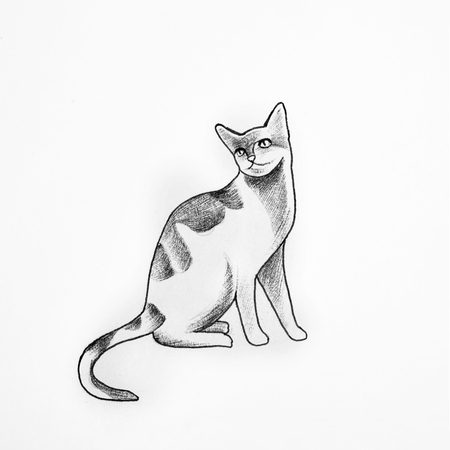 shaggy: Sketch of beautiful cat on a white background.