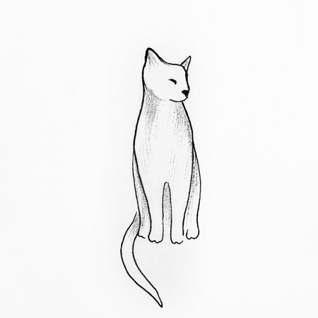one of a kind: Sketch of beautiful cat on a white background.