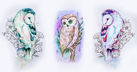 Set of sketches of multicolored owls on a white background. Stock Photo
