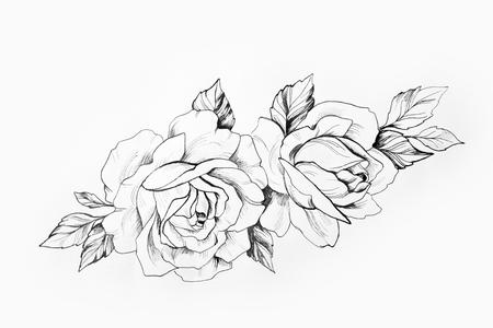 Schets van een tak van mooie rozen op een witte achtergrond.