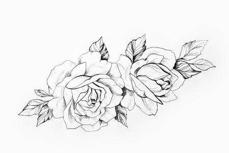 Sketch of a branch of beautiful roses on a white background. Banco de Imagens - 81149110