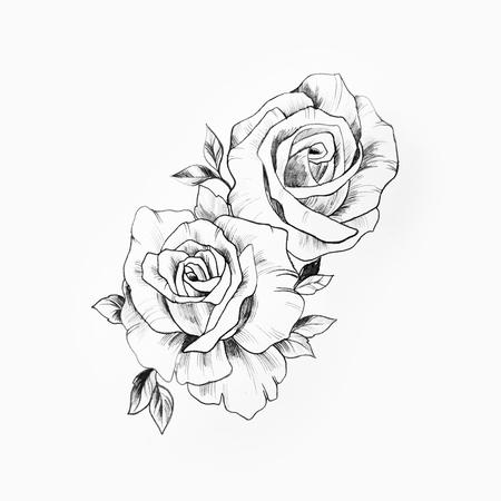 Croquis d'une branche de belles roses sur fond blanc. Banque d'images - 80973196