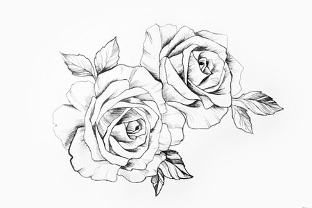 Sketch of a branch of beautiful roses on a white background.