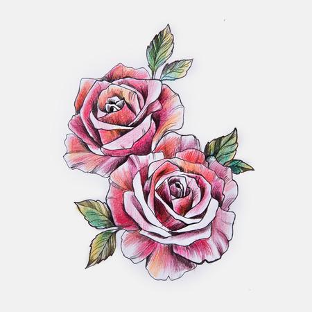 Schets van een mooie tak van rode rozen op een witte achtergrond.