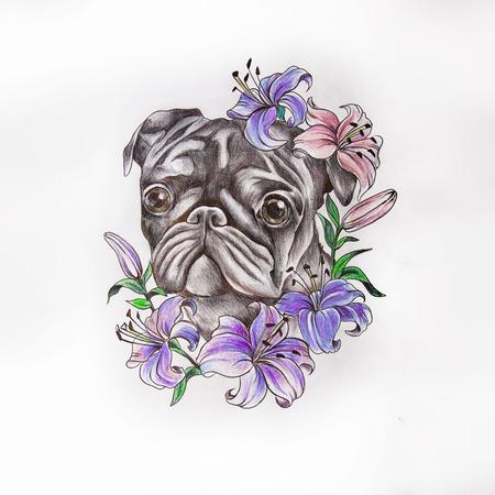 Skizze von Pug in Blumen auf einem weißen Hintergrund Standard-Bild - 81802210