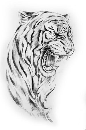 Sketch of the head of a tiger on a white background. Stock Photo