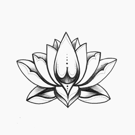 A sketch of a beautiful black and white lotus flower on a white a sketch of a beautiful black and white lotus flower on a white background stock mightylinksfo