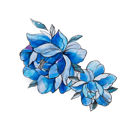 Sketch of beautiful blue peonies on a white background. Standard-Bild