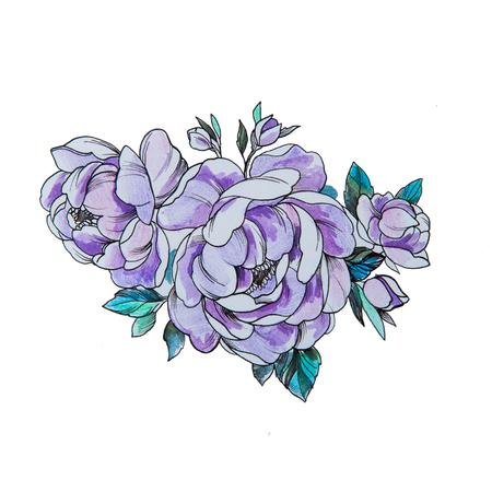 Sketch of beautiful purple peonies on a white background. Standard-Bild