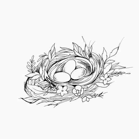 Sketch of a birds nest with eggs on a white background.