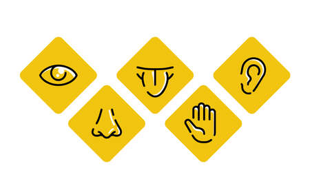 Five basic human senses - touch, sight, hearing, smell and taste - sensing organs - eye, mouth, ear, nose and hand, medical icons collection - set of isolated vector pictograms