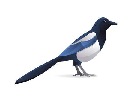 Magpie bird in modern cartoon style - isolated vector illustration Vector Illustratie
