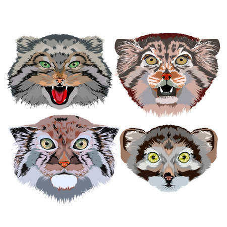 Portraits of steppe cats (Manul), the image for use on greeting cards, print and design projects