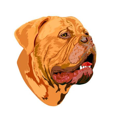 Retrato de un perro de Burdeos, imagen para usar en tarjetas de felicitación, proyectos de impresión y diseño.