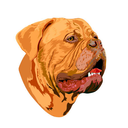Portrait of a Bordeaux dog, image for use on greeting cards, print and design projects