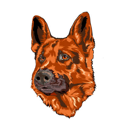 hardy: German shepherd .Image for design projects and advertising and decoration Illustration