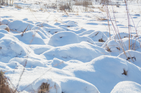 in the field of tussocks under the snow on a Sunny day. Stock Photo