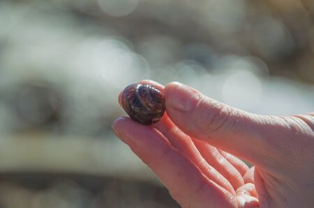 small world: the snail shell in his hands.