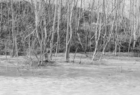 黒と白、岸辺の木に氷に凍っていた。