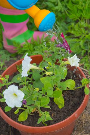 Kindergießkanne gießt einen Topf mit Blumen. Standard-Bild - 79101169