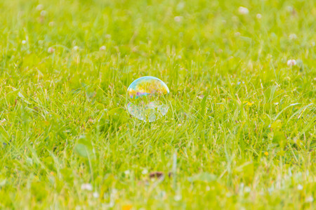 small bubble lying on the grass.