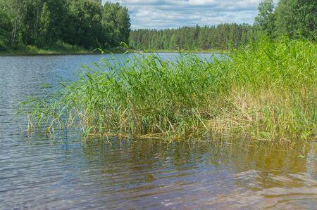 나무가 우거진 강 은행 및 갈 대, 가로입니다. 스톡 콘텐츠