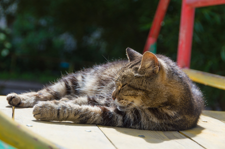 Sunny day cat basks in the sun. Stock Photo