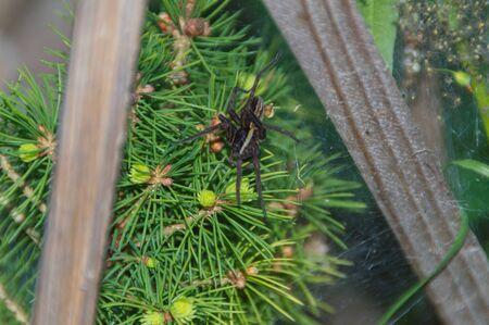 Een spin die een web in de boom spint.