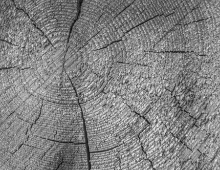 black and white closeup of the tree with the roughness of the background Stock Photo