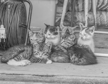 black and white, abandoned, homeless kittens in the barn Stock Photo