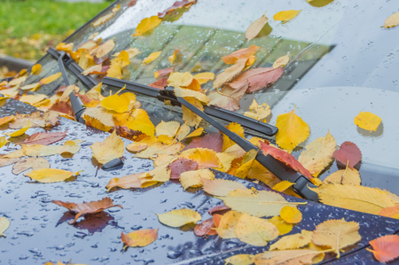 covered with sheets of automotive glass, autumn Stock Photo