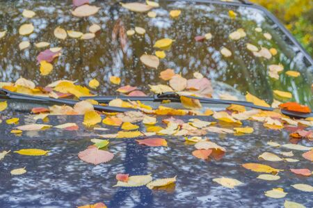 closeup of an autumn day the car windshield covered with leaves