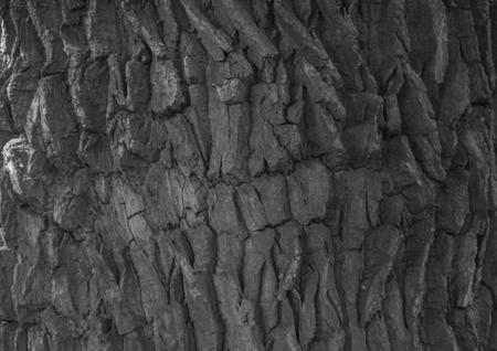 background, bark old tree close up Stock Photo