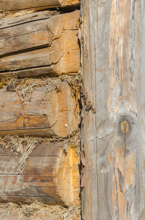 the walls of the barn, in the gap clogged moss, natural, environmentally friendly insulation