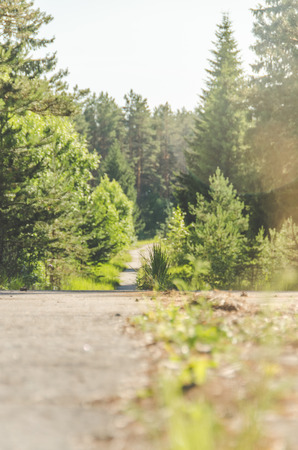 summer day on the road in the forest, pine trees Stock Photo